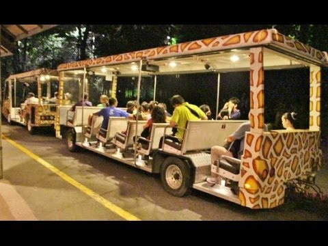Explore the thrilling Night Jungle safari, to give you a closer look of the animal kingdom with Roaming routes