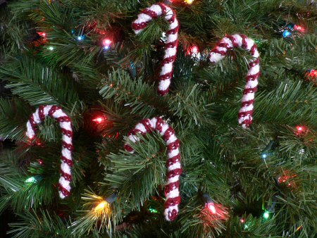 Put Candy Canes Under Your Tree