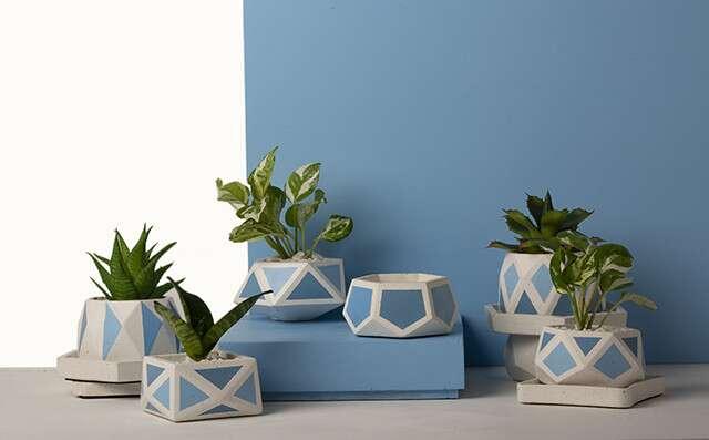 Showcase plant collection is the best garden decoration idea.