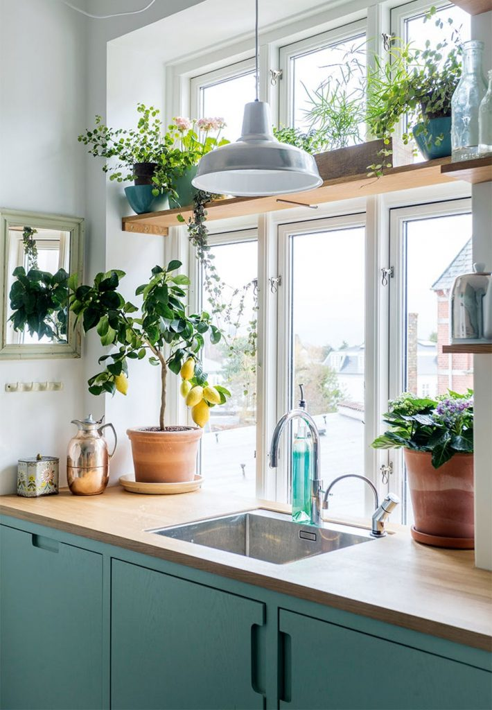 Hang plants